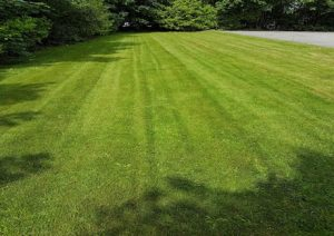 Lawn Mowing Service Solihull